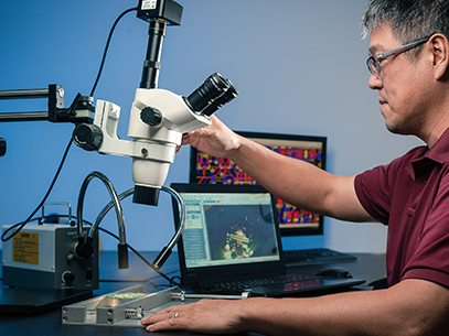 about scientist inspecting through microscope